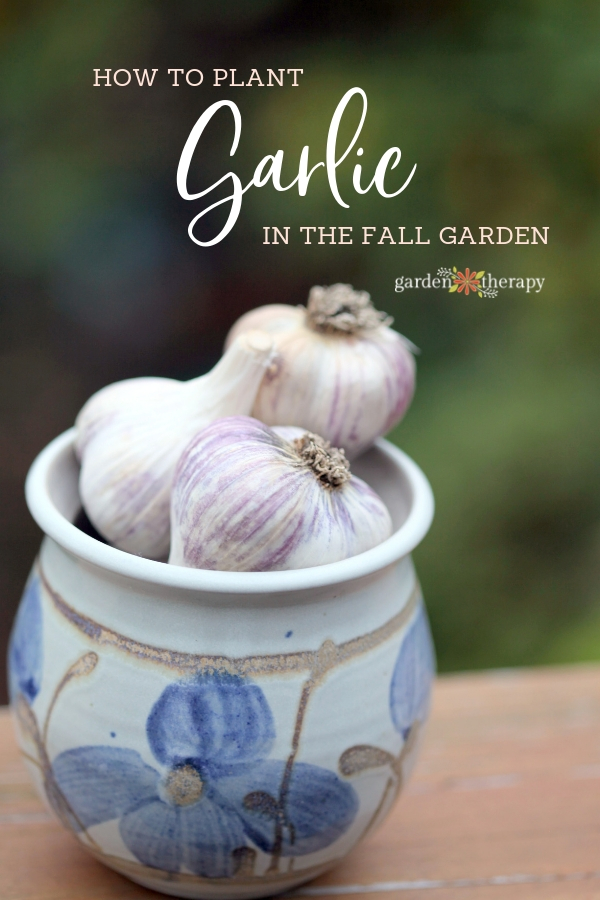 "Garlic bulbs in a ceramic pot with copy ""How to Plant Garlic in the Fall Garden"""