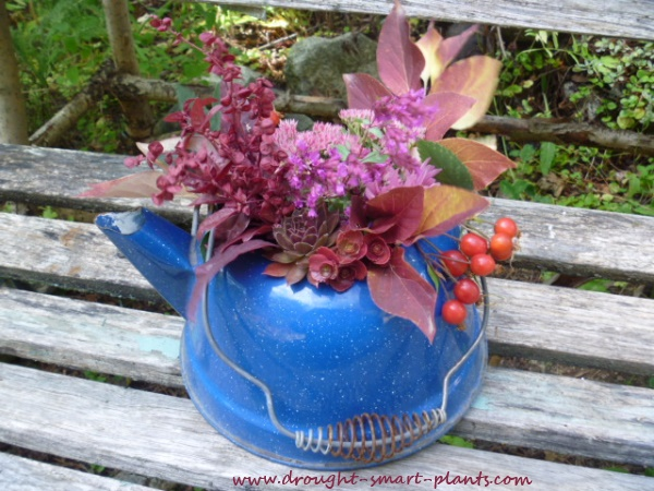 succulent flower arrangement in blue kettle