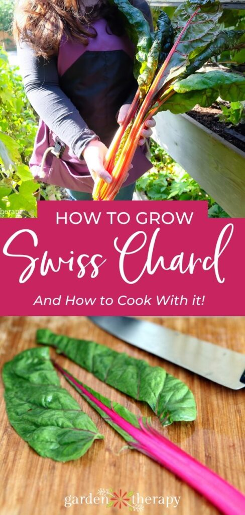How to Grow and Cook Swiss Chard Garden Therapy