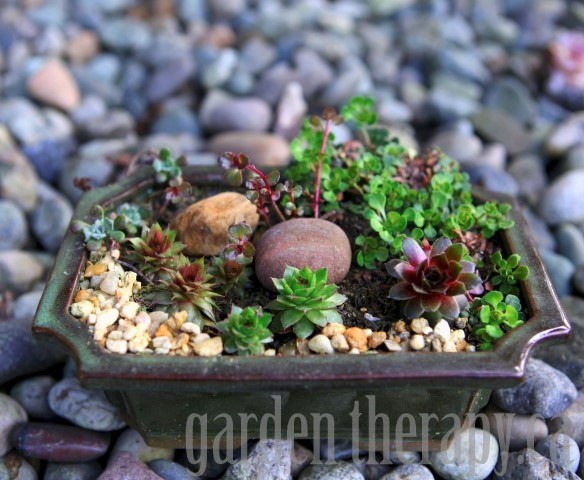 Small Planter with Succulents via gardentherapy.ca