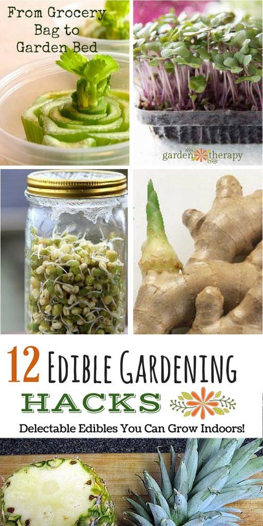 12 edible gardening hacks creative gardeners share how they grow food indoors in unique ways - Garden Hacks