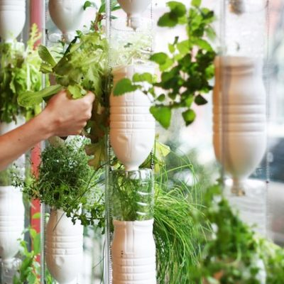 12 Edible Gardening Hacks: Delectable Edibles You Can Grow Indoors!