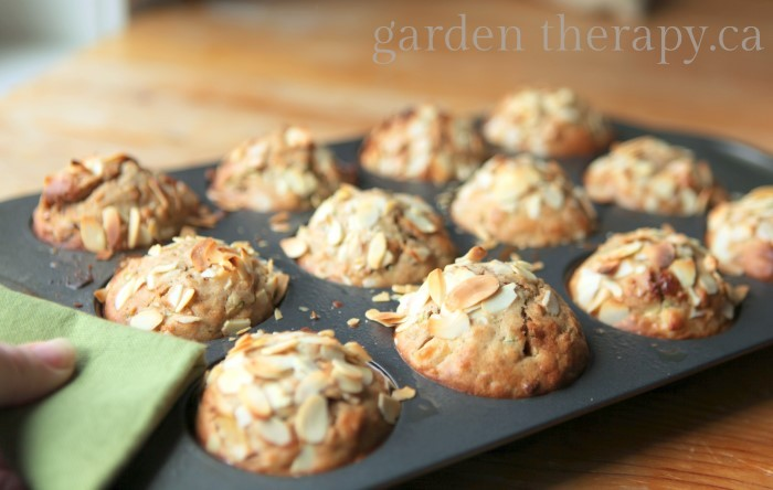 Everything in the Garden Muffins (Zucchini Apple Cranberry Walnut Almond Oatmeal)