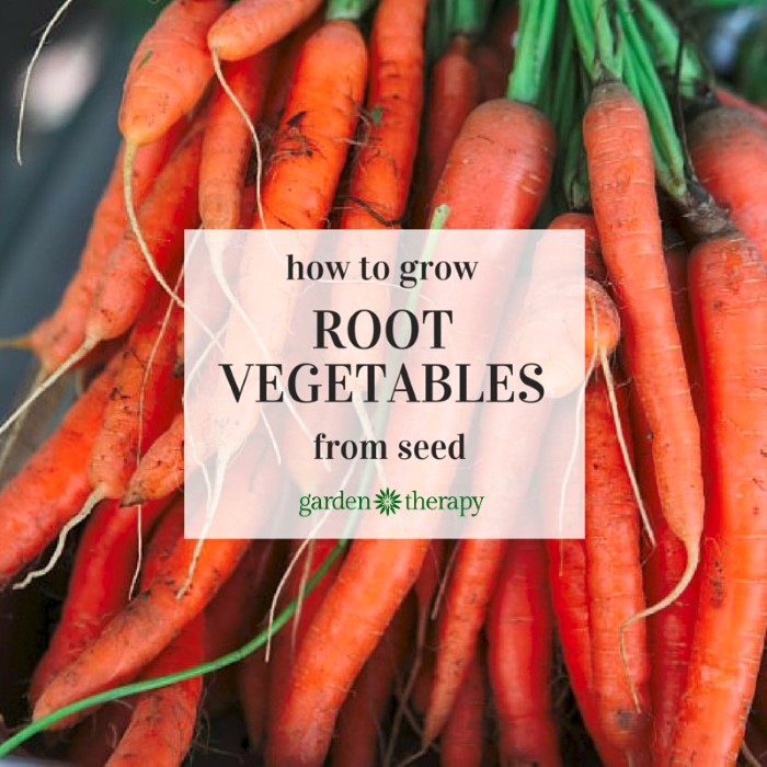 how to start the seeds for Root Vegetables like Carrots, Beets, and Radishes