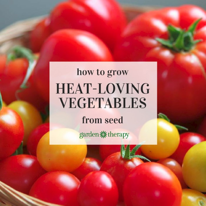 how to start the seeds for heat-loving Vegetables like Tomatoes, Eggplants, and Peppers