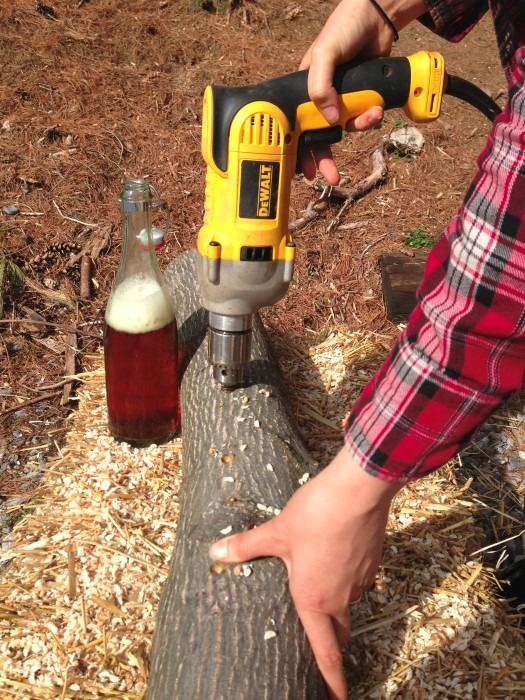 Drilling log for growing mushrooms