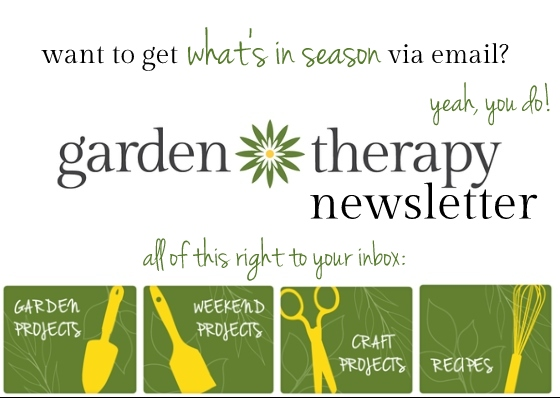 Garden Therapy Newsletter Sign Up - Get What's in Season right to your inbox!