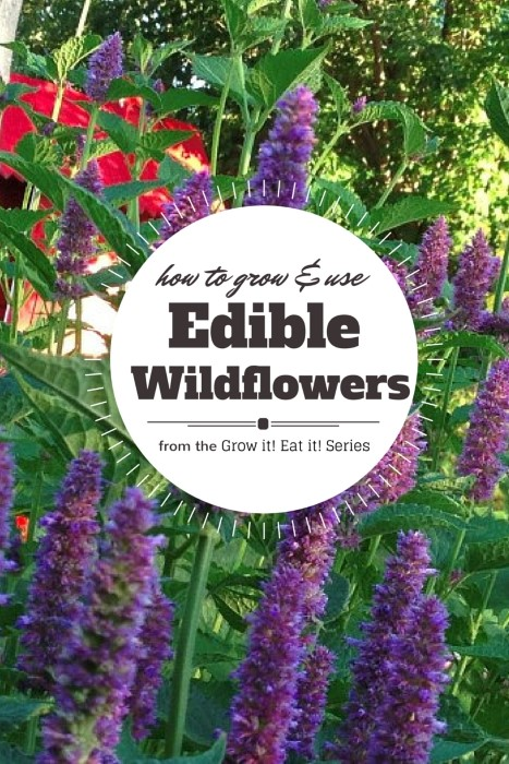 Grow a wildflower garden that is edible - here are 6 of the best edible wildflowers and how to cook them