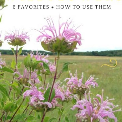 Edible Wildflowers: Grow it! Eat it!
