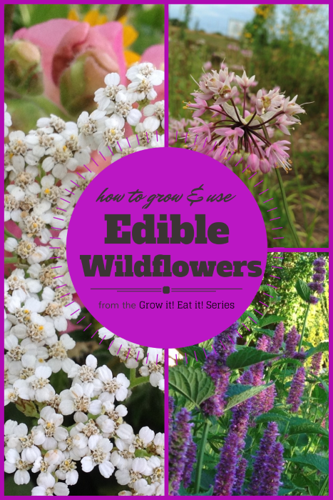 How to Grow and Use Edible Wildflowers from the Grow it! Eat it! Series (Custom)