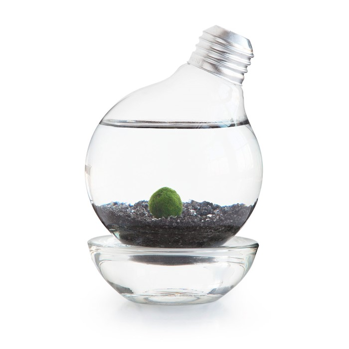 Marimo Ball Light Bulb Terrarium found at UncommonGoods