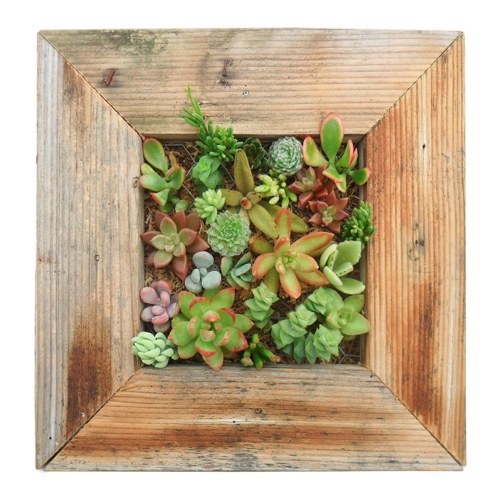 Succulent Living Wall Frame Kit found at UncommonGoods