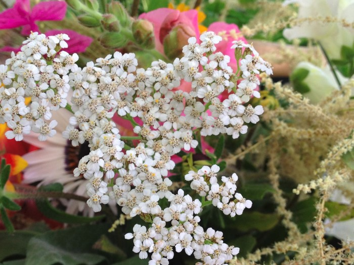 edible white yarrow flowers in a bouquet of mixed wildflowers