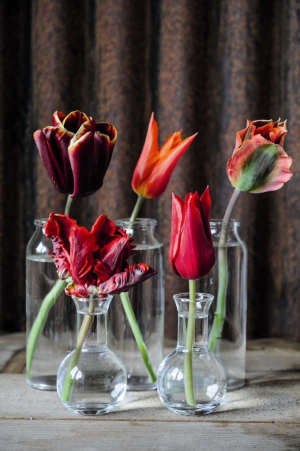 single red tulips in glass vases