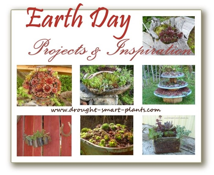 drought smart plants earth-day-projects