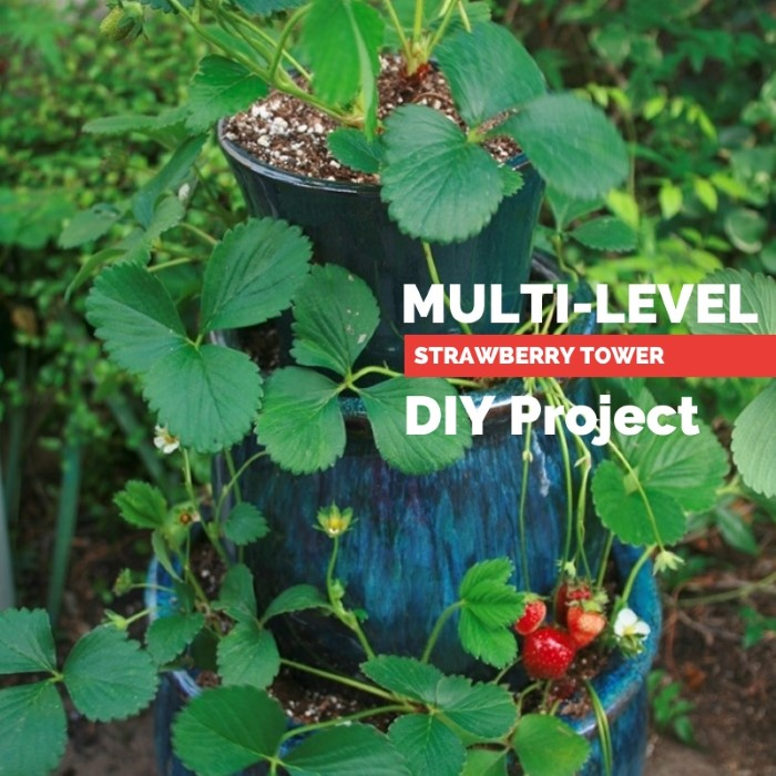 Multi Level Strawberry Planter DIY Project