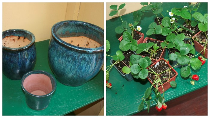 Strawberry Planter DIY Instructions
