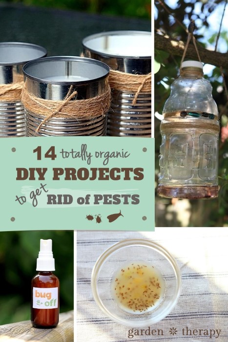 14 Totally Organic DIY Projects To Get Rid Of Pests Safely And Naturally