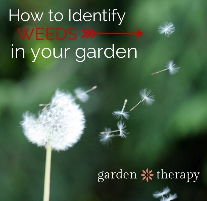 How to Identify Weeds in Your Garden
