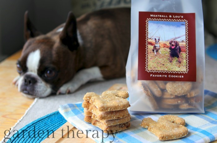 Good dog - you will get a cookie as soon as the photos are taken - recipe in post