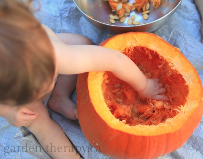 Baby Sensory Play - cleaning a pumpkin plus a recipe for the most amazing roasted seeds