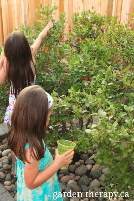 Getting kids to harvest berries instills a love for the garden at an early age - plus many more ideas on engaging the senses to make the garden a playful space.