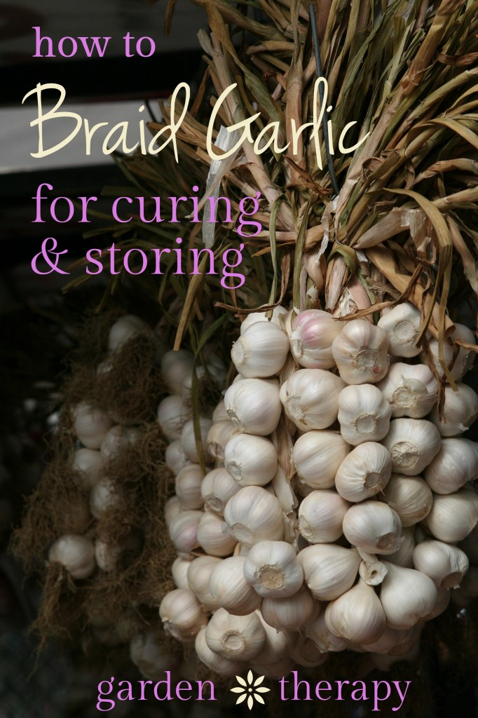 How to Braid Garlic for Curing and Storage