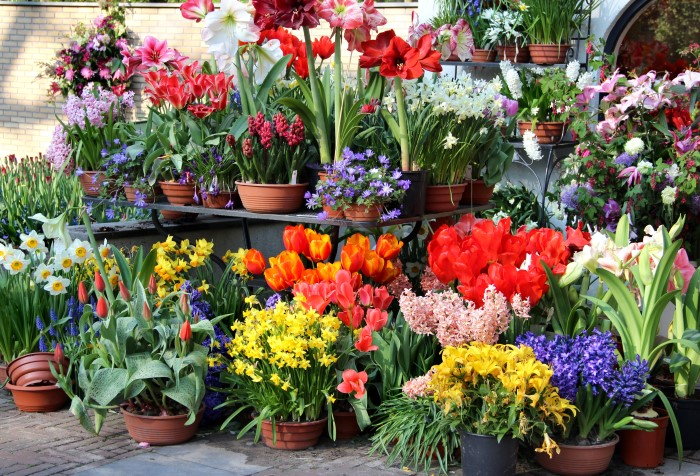 Plant colorful fall bulb planters in the fall and next spring they will be gorgeous!
