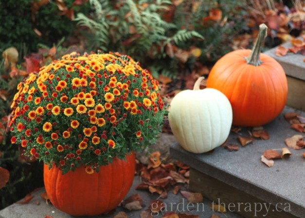 Tips And Ideas On Making Carved Pumkins Last