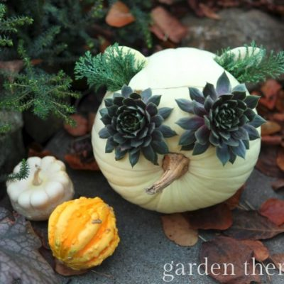 Hooty the Owl Pumpkin