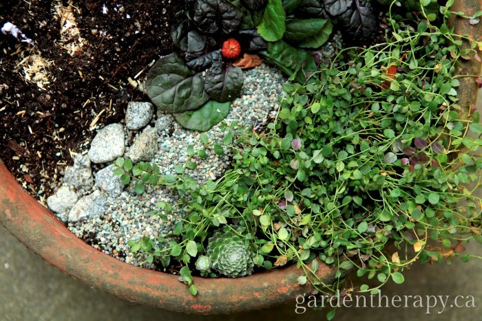 Halloween Mini Garden cobwebs and groundcover