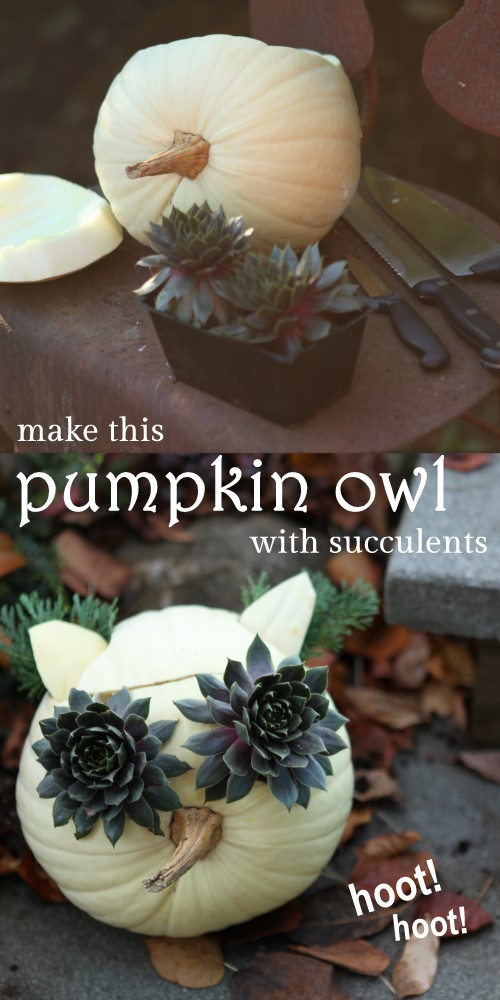 Turn a white pumpkin and some black succulents into a hooty owl planter!