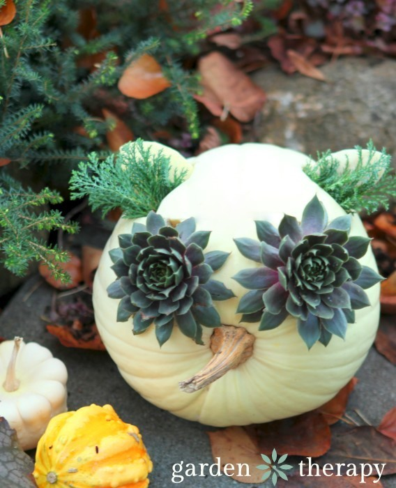 "Owl made from a white pumpkin, succulents and evergreen ""ears"" - a great Halloween or fall decorating project!"