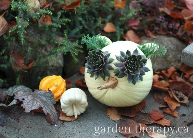 An owl jack o lantern, or jack o PLANTern, made simply with a pumpkin, sedum, and evergreens. Easy fall decor idea for the outdoors!