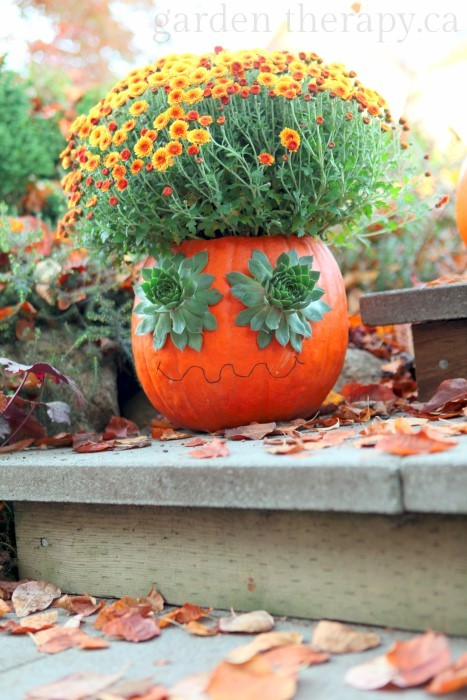 carved Halloween pumpkin planter idea