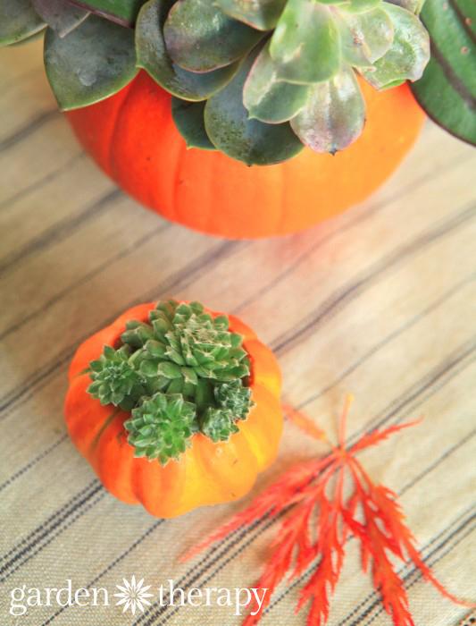 Mini Pumpkin Succulent Planters