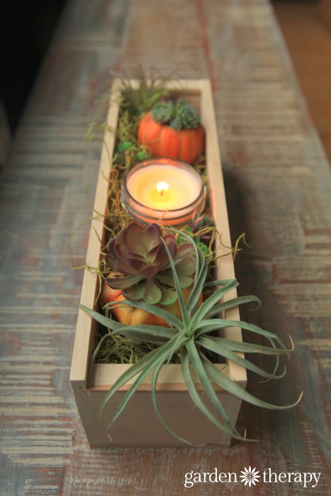 Wood Box Thanksgiving Airplant and Succulent Centerpiece