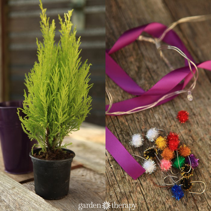 two images side by side - one small evergreen plant and another of christmas decor