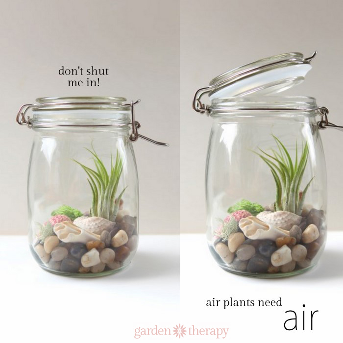 don't shut me in! Air plants need air.