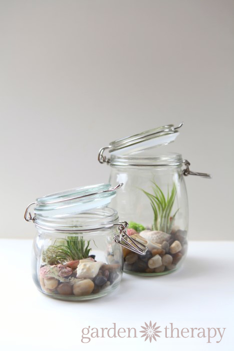 mason jar air plant seashell terrariums