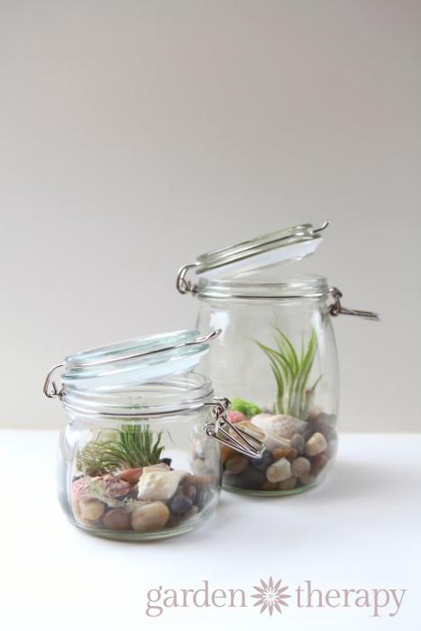 mason jar air plant seashell terrariums