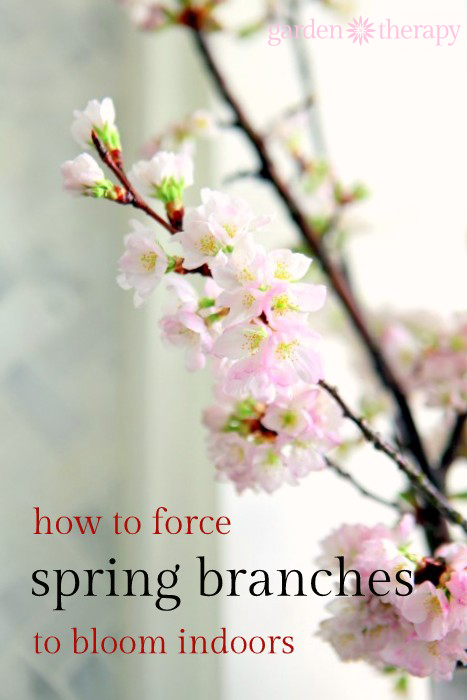 Forcing spring branches is simple!