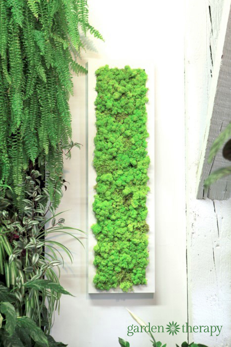 Moss Wall Art in long white frame from ByNature Studio Tour