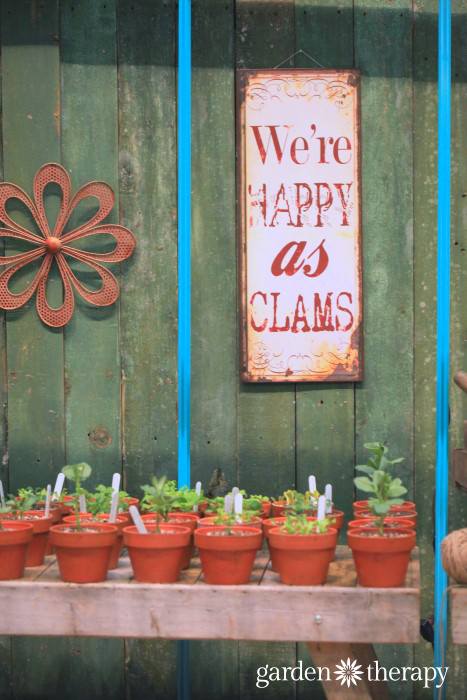We're Happy as Clams from the Blue Greenhouse Seaside Garden Design Feature