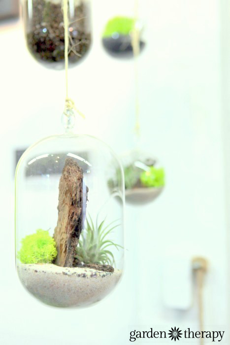 hanging terrariums with reindeer moss, air plants and bark from ByNature Studio Tour