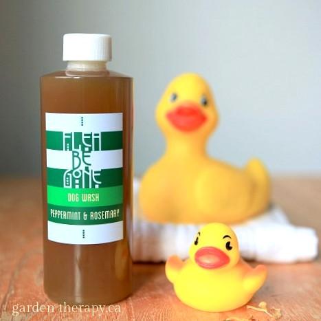 A gentle dog shampoo to keep away fleas