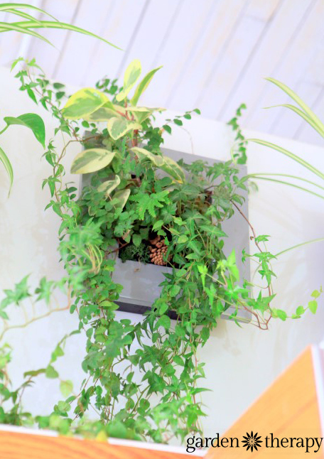 A thriving living wall planter from ByNature Studio Tour