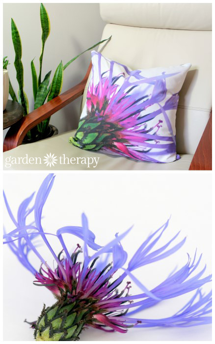 Centurea Montana printed on soft cotton linen blend fabric and made into throw pillows!