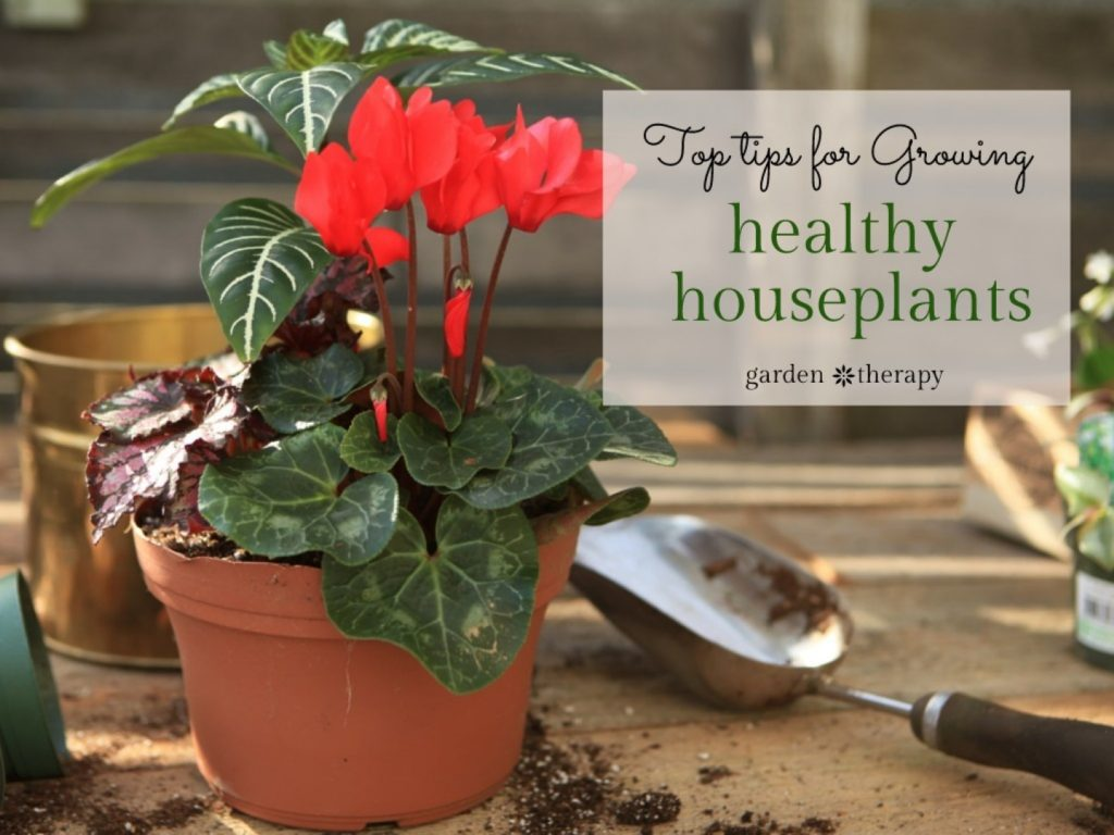 Essential guide for houseplants