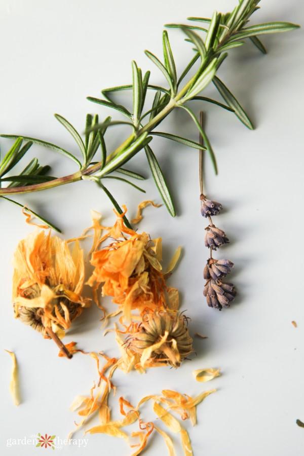 Fresh and dried herbs rosemary calendula lavender